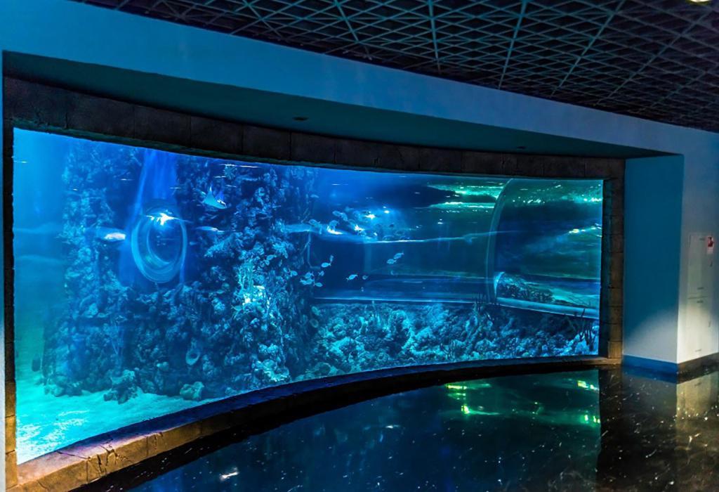 okeanarium-v-krokus-siti.jpg